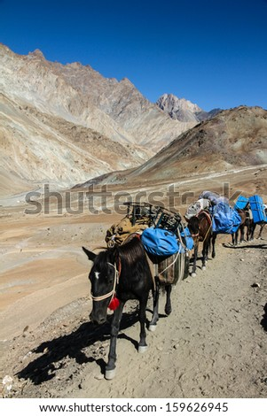 Horses with Load in Dry Himalaya mountains - Markha Valley, Ladakh, India - stock photo