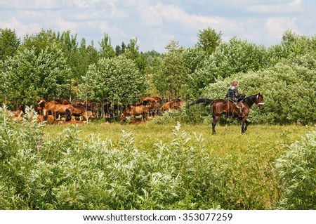 Horses with the shepherd on a pasture. - stock photo