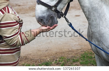Horsewoman feeding white horse out of hand