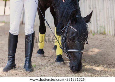 horsewoman jockey in uniform standing with black horse outdoors - stock photo