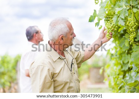 Horticultural experts checking the development of grapes. - stock photo