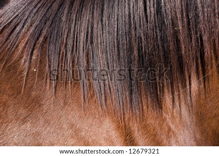 hose grazing on a meadow - stock photo