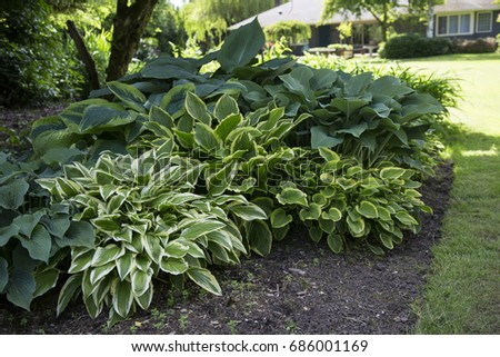 Variegated House Plants Dark Green And White on white shade plants, pink variegated spider plants, variegated euonymus plants, yellow and green plants,