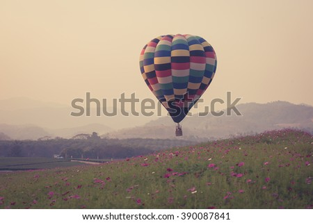 hot air balloon and cosmos flowers field with sunset. - stock photo