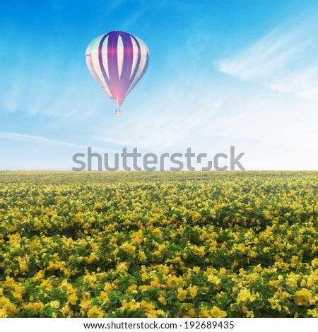 Hot air balloon flying over yellow flower field