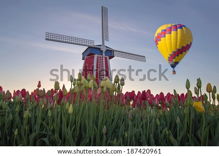 Hot Air Balloon Over Tulip Field with Windmill in Woodburn Oregon - stock photo