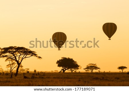 Hot Air Balloons over the Serengeti at sunrise - stock photo