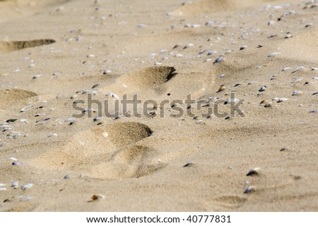 hot beige dirty sand texture and shells - stock photo