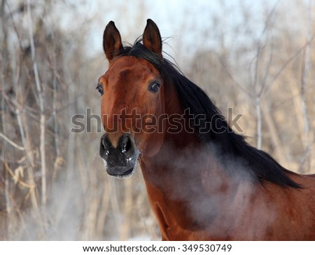 Hot breath of horse in winter day - stock photo