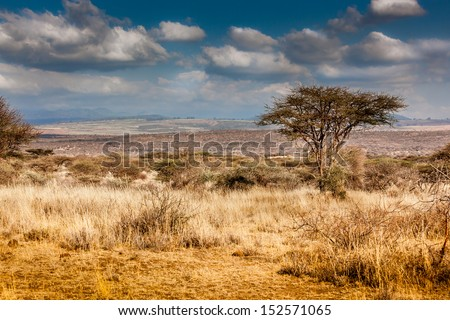 Hot, dry, parched Serengeti desert in Africa - stock photo