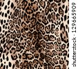 hot leopard skin seamless background - stock vector