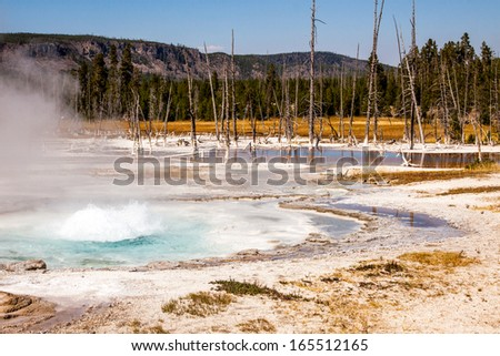 Hot spring at Yellowstone. Rising hot water releases heat energy by evaporation. The microorganisms which live in and around the hot springs often make the pools very colorful and trees white below.