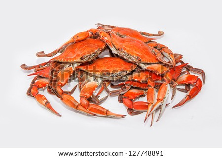 Hot steamed blue crabs symbol of maryland state and ocean for Maryland state fish