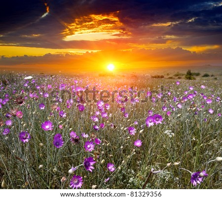 Hot sunset over summer meadow