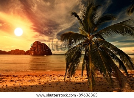 Hot Tripical Beach Sunset with a Palm - stock photo