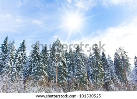 Hot Winter snow - stock photo