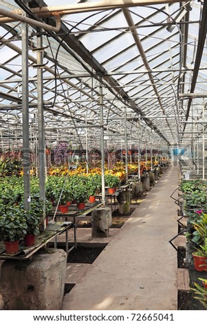 Hothouse for a flower cultivation inside - stock photo