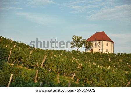 House among the vineyards in summer. Skalce, Slovenske Konjice, Slovenia - stock photo