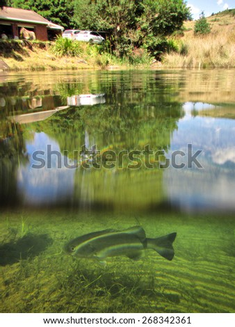 House and lake with trout - half-underwater shot, soft focus on fish. Shot in Midlands Meander, Natal, South Africa. - stock photo
