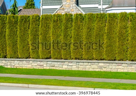 """House behind nicely trimmed """"Green fence ' from evergreen plants dividing the street and private property. Keeps privacy and security. Landscape trimming design. - stock photo"""