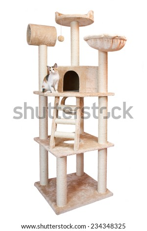 House cat on white background - stock photo