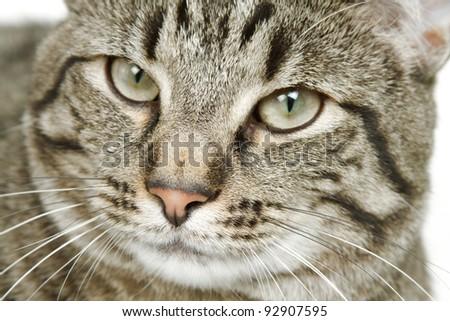 House Cat Portrait - stock photo