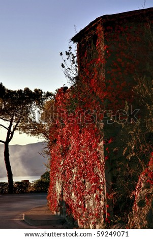 house covered of red leaves in autumn - stock photo