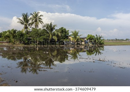 House farmer with paddy field with skies reflection at Sungai Besar, Malaysia - stock photo