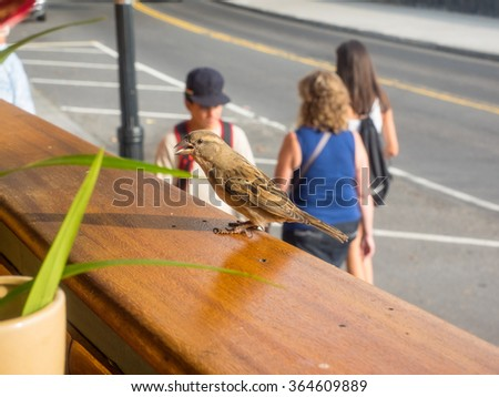 House finch (Haemorhous mexicanus) is a bird in the finch family Fringillidae. - stock photo