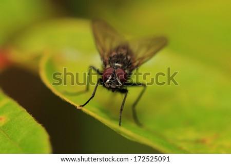 house fly - stock photo