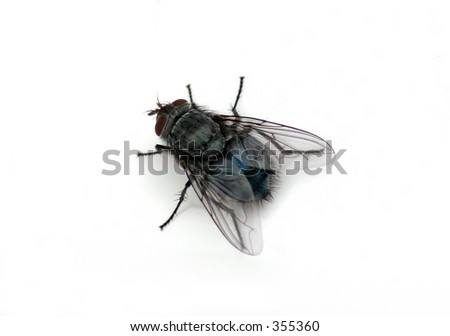 House fly macro isolated over white - stock photo