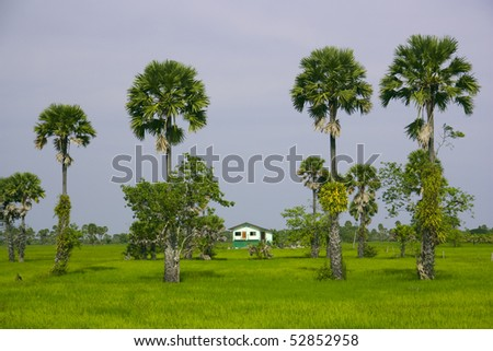 House, green field and trees
