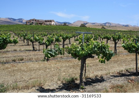 house on a vineyard in California - stock photo