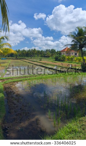 House on rice field at the town of Ubud in Bali - stock photo