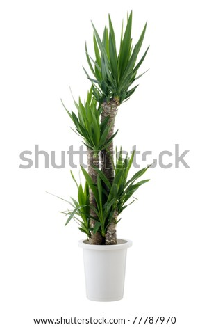 House plant - stock photo