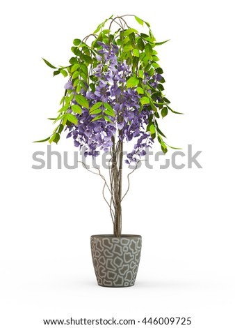 House plant Crassula in a flower pot isolated on white background. 3D Rendering, Illustration.