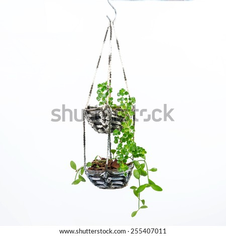 House plant hanging on white background, Crochet work