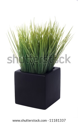 house plant in a square pot isolated on white - stock photo