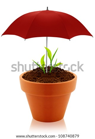 House plant in clay pot with umbrella isolated on white background. - stock photo