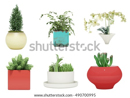 house plant.indoor plant. plant.Foliage plant leaves isolated on a white background.