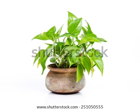 House Plant on white background