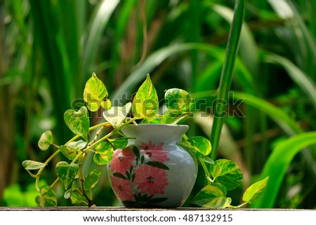House Plant potted plant blur background