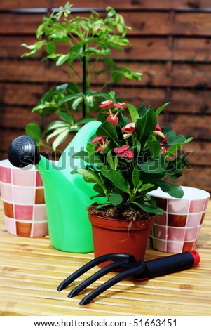 house plant with watering can and soil - flowers and plants - stock photo