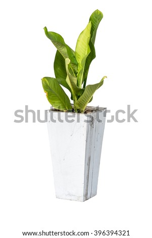 house plants in cement pot isolate on white background - stock photo