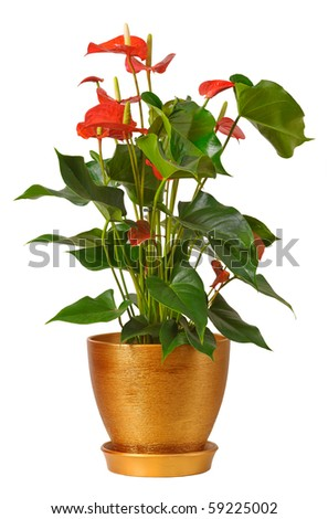 House plants isolated on white background - stock photo