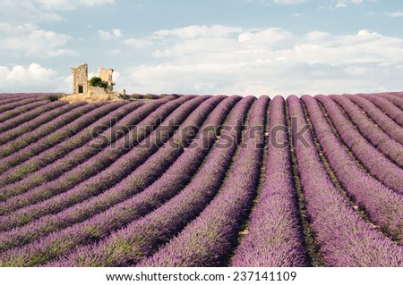 House ruin in fields of lavender,Valensole, Provence ,France - stock photo