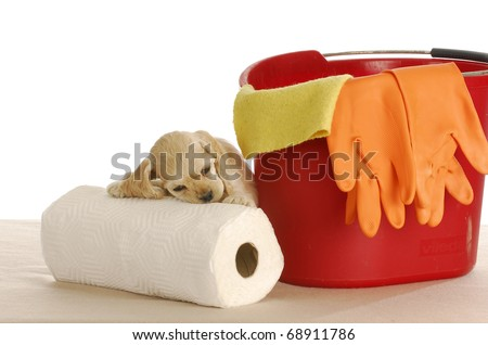 house training puppy - cute cocker spaniel puppy resting head on paper towels with pail and bucket - stock photo