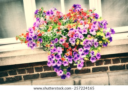 House window decorated with colorful petunias - stock photo