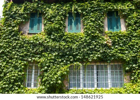 House with ivy - stock photo