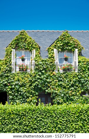 House with ivy, France